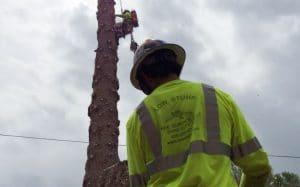 Tree Care Specialist of Low Stump Tree Service
