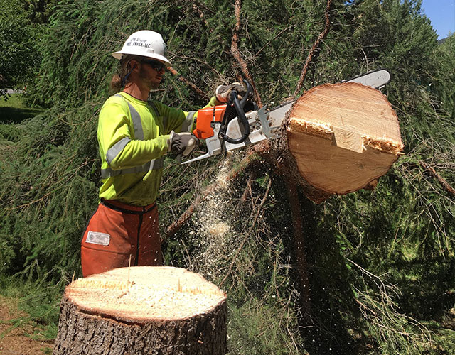 A Man cutting Tree with Tools