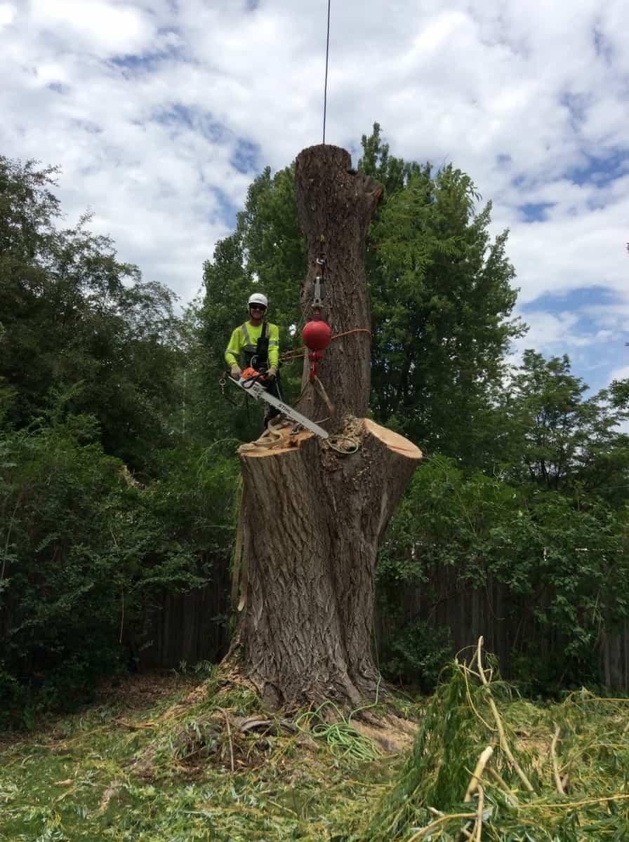 Man cutting down the tree