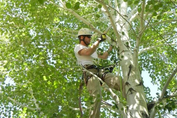 Man cutting the branch of the tree