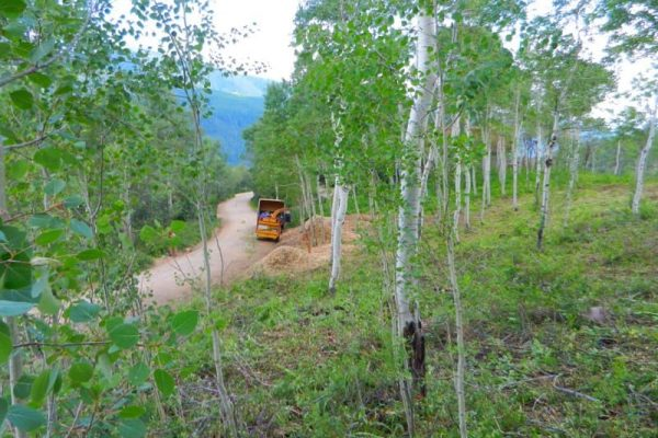 A vehicle removing waste from the forest