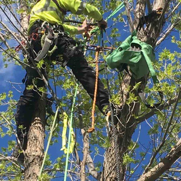 Servicemen working on a tree