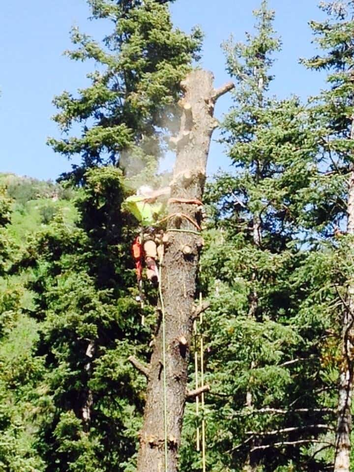 Man climbed and working on branches of the tree