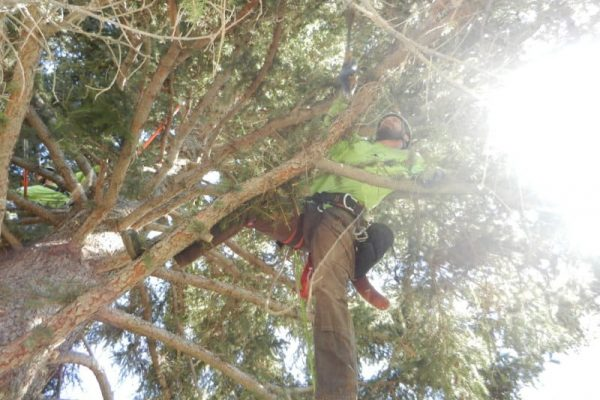 People working on branches of the tree