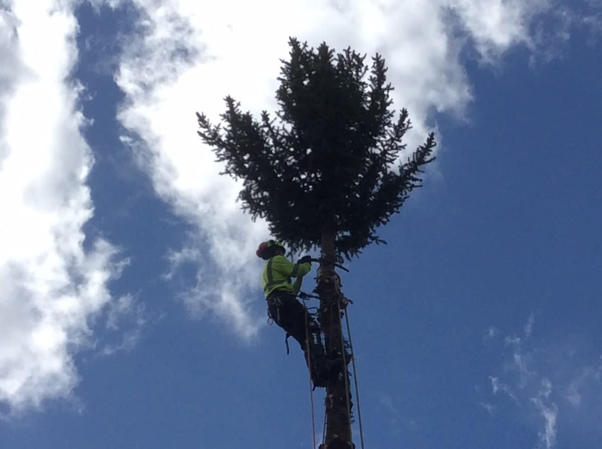 A man climbed on top of the tree