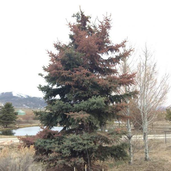 A Giant Beautiful Tree