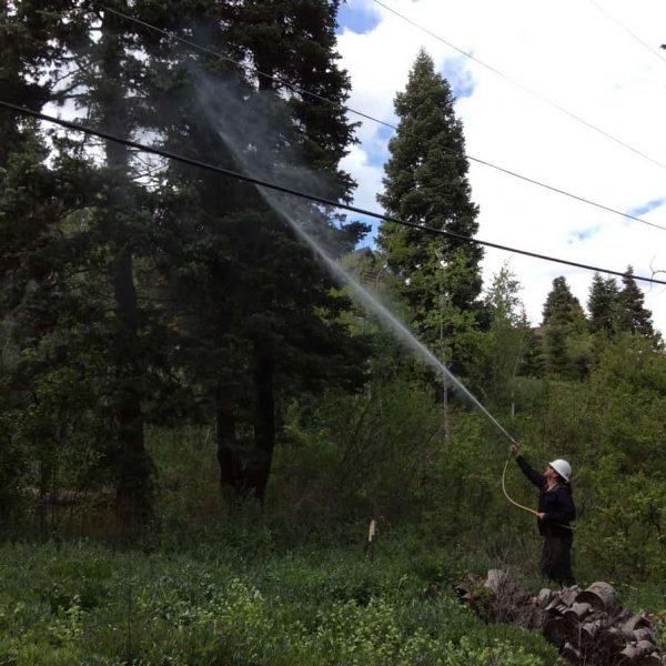 Serviceman sprinkling water on the tree