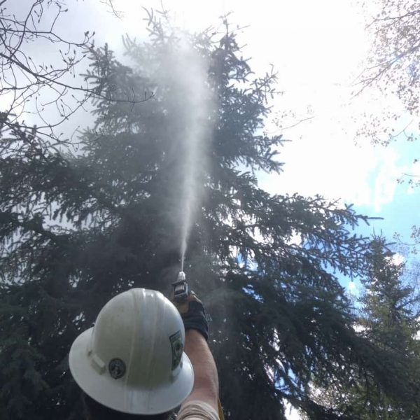 A man spraying water on the tree