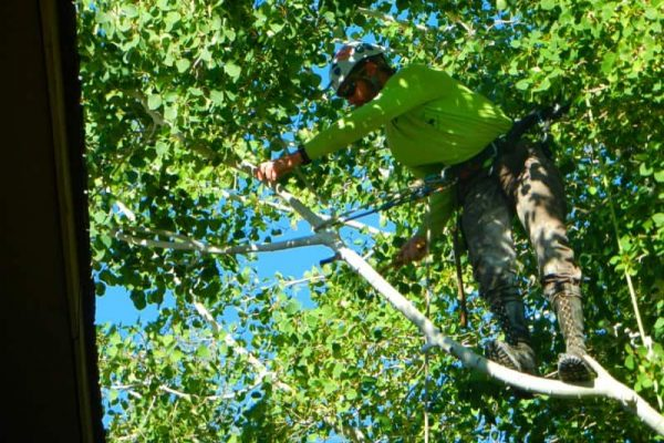 Man on the branches of the tree