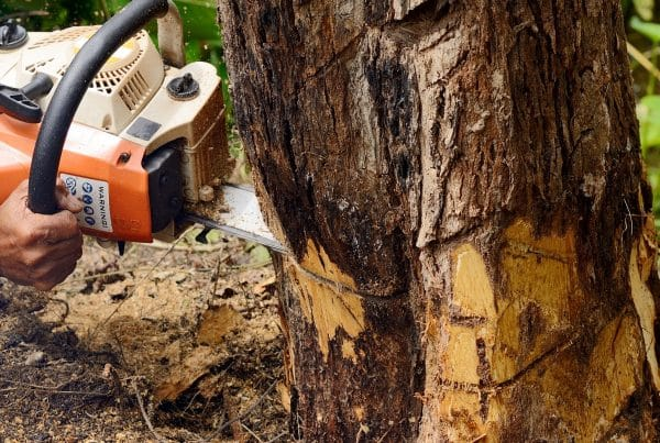 Man with chainsaw cutting down a tree