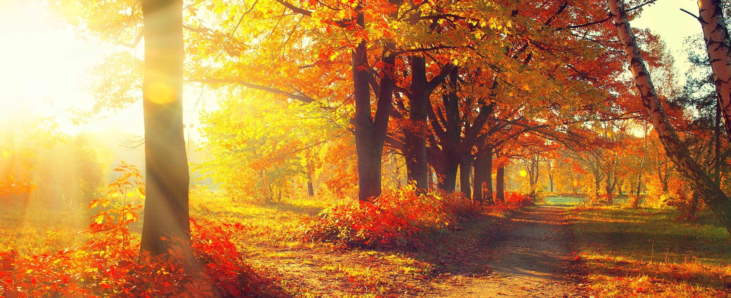 Trees and Leaves in sun rays